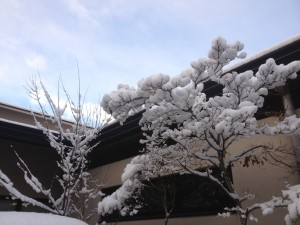 写真(11)木雪
