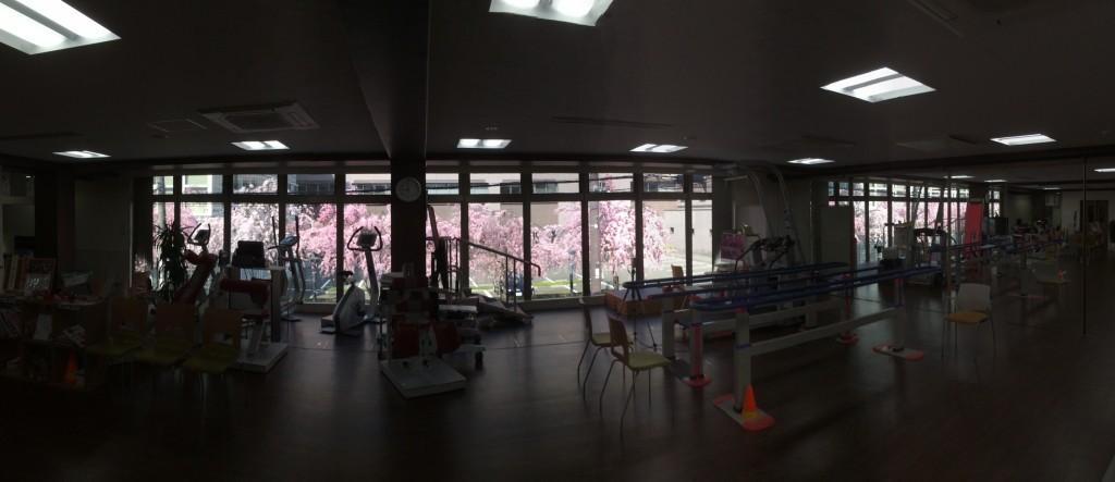 御所南の桜